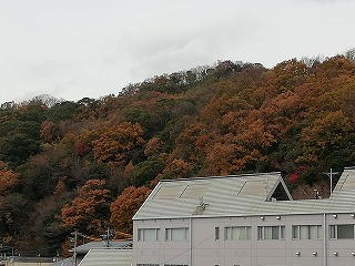 諏訪山 紅葉