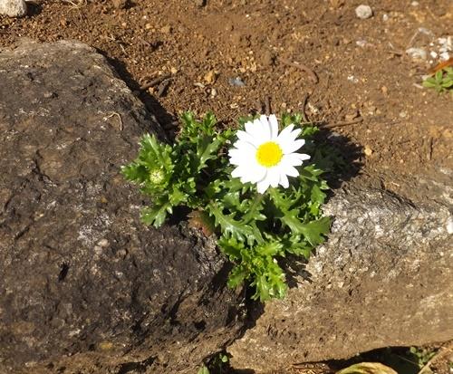 春の兆し11