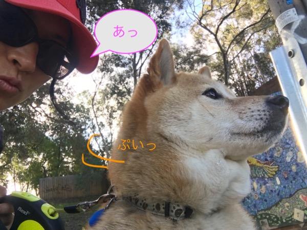 つんでれ犬2
