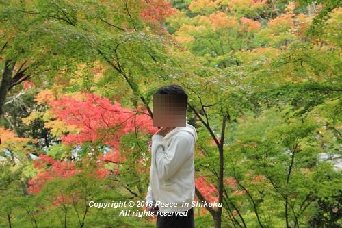isuobarih-10296352.jpg