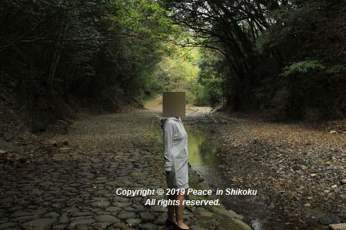 kagawakouyou-11127001.jpg