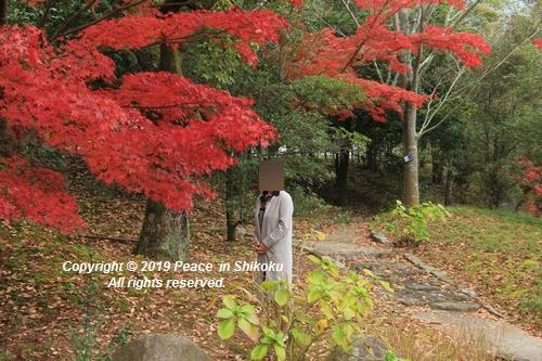 kagawakouyou-11127170.jpg