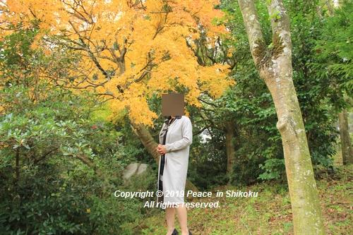 kagawakouyou-11127217.jpg