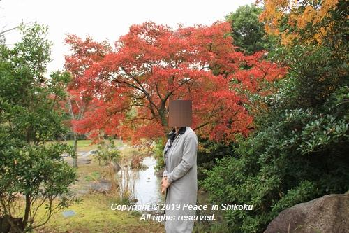 kagawakouyou-11127218.jpg