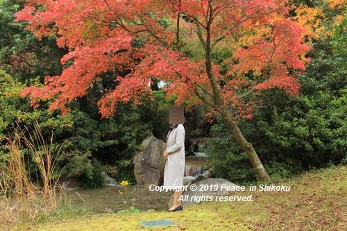 kagawakouyou-11127221.jpg