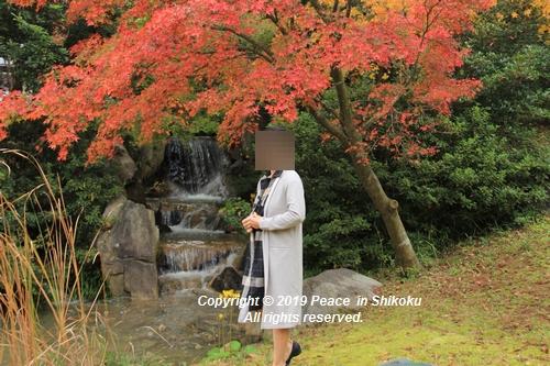 kagawakouyou-11127226.jpg