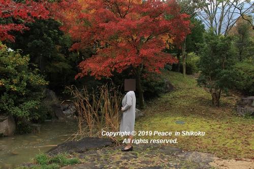 kagawakouyou-11127237.jpg