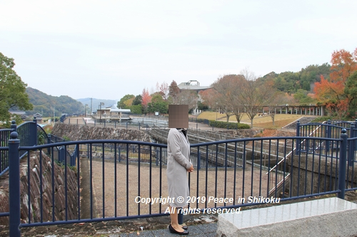 kagawakouyou-11127292.jpg