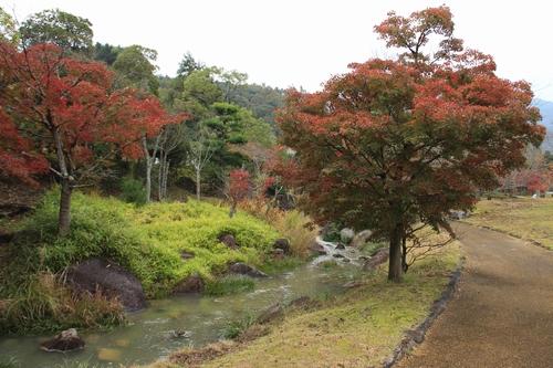 kagawakouyou-11127296.jpg