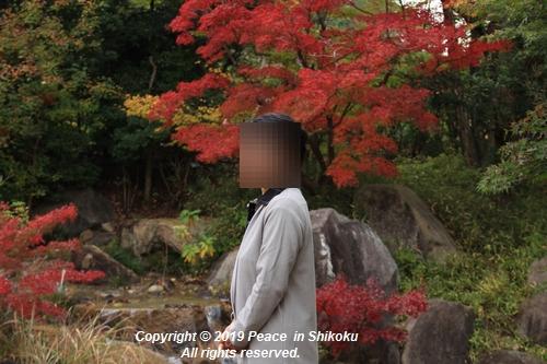 kagawakouyou-11127302.jpg