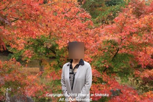 kagawakouyou-11127307.jpg