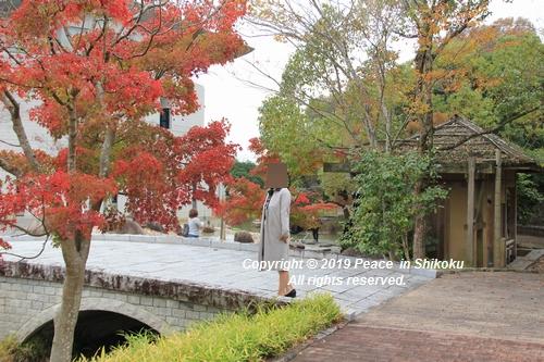 kagawakouyou-11127313.jpg