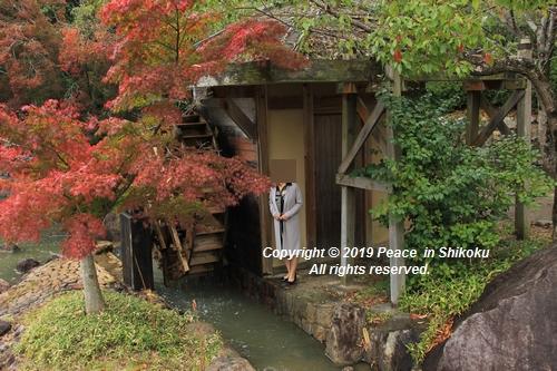 kagawakouyou-11127317.jpg