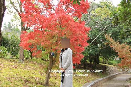 kagawakouyou-11127325.jpg