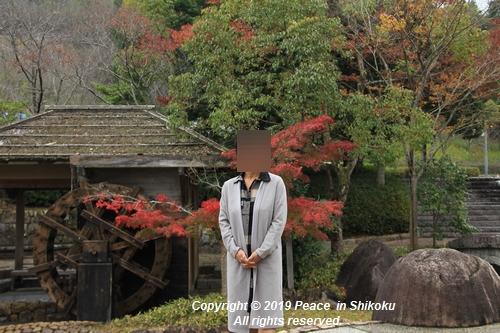kagawakouyou-11127346.jpg