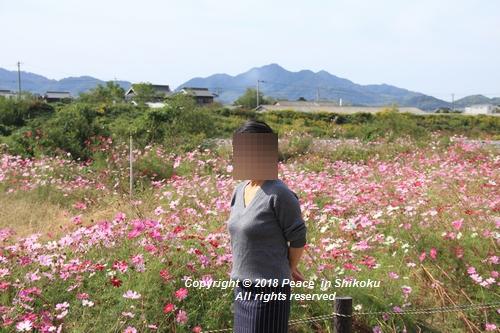 omusokmannou-10225727.jpg