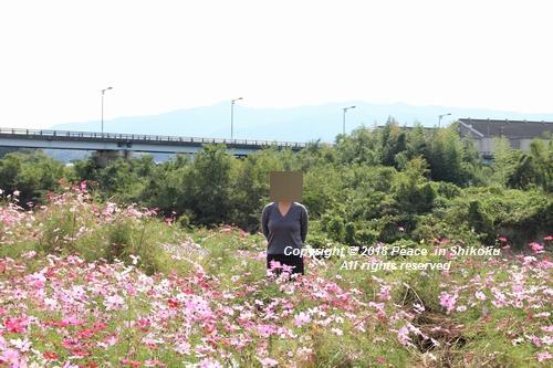 omusokmannou-10225734.jpg