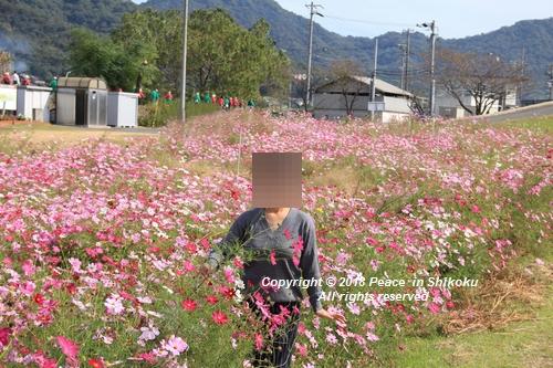 omusokmannou-10225739.jpg