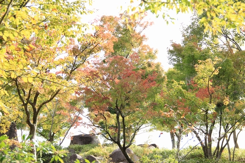 omusokmannou-10225802.jpg