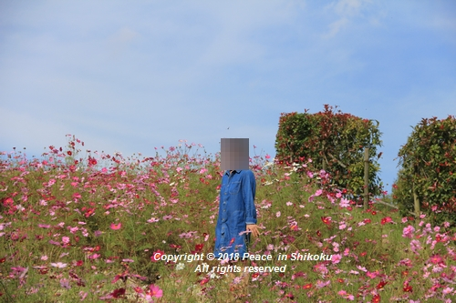 omusokmannou-10226145.jpg