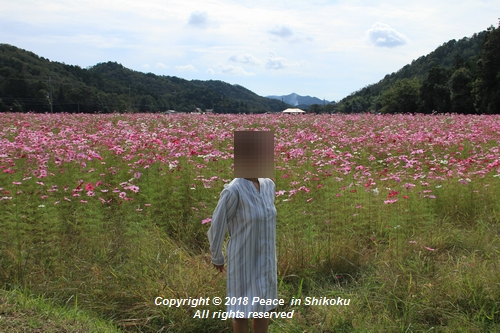 usomusoka-10155533.jpg