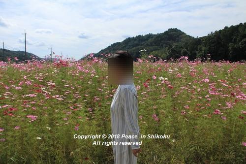 usomusoka-10155555.jpg