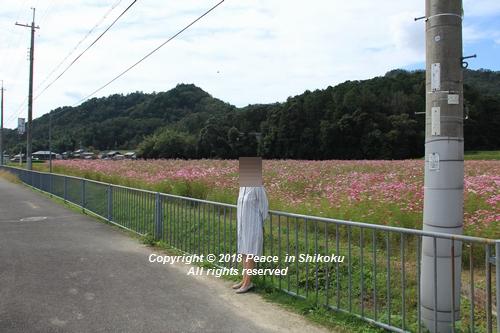 usomusoka-10155562.jpg