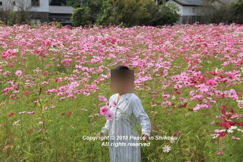 usomusoka-10155576.jpg