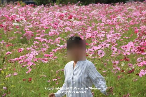 usomusoka-10155578.jpg