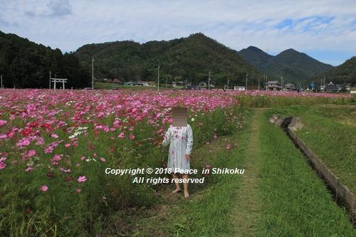 usomusoka-10155595.jpg