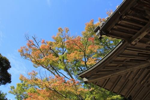 usomusoka-10155670.jpg