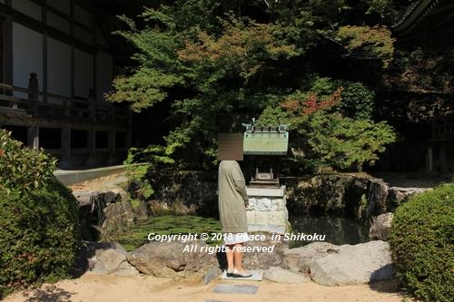 usomusoka-10155671.jpg