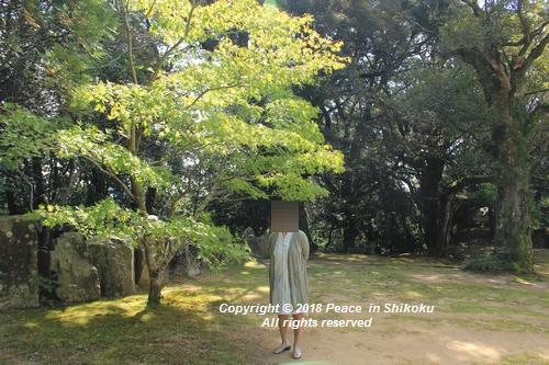 usomusoka-10155692.jpg