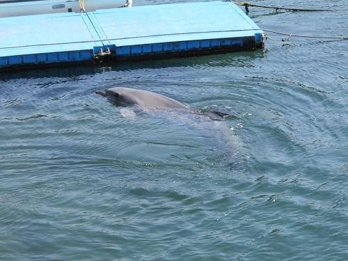 IMG_9069 鹿児島水族館