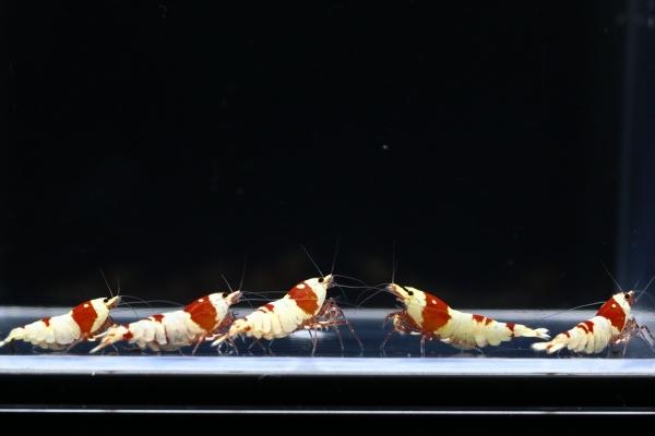 shrimp cafe_1933