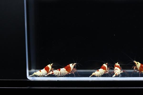 shrimp cafe_1942