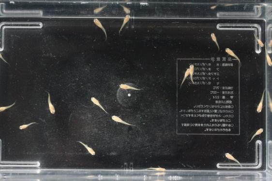 shrimp cafe_2034
