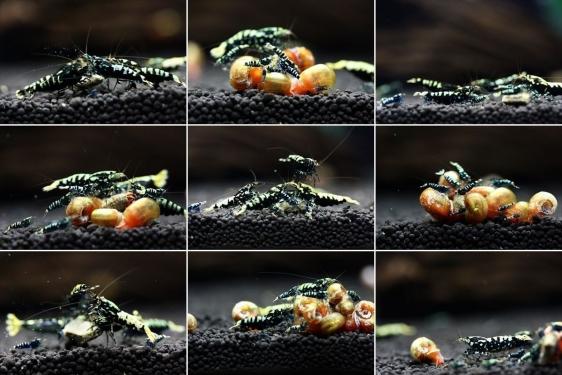 shrimp cafe_2085