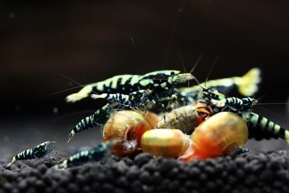 shrimp cafe_2089