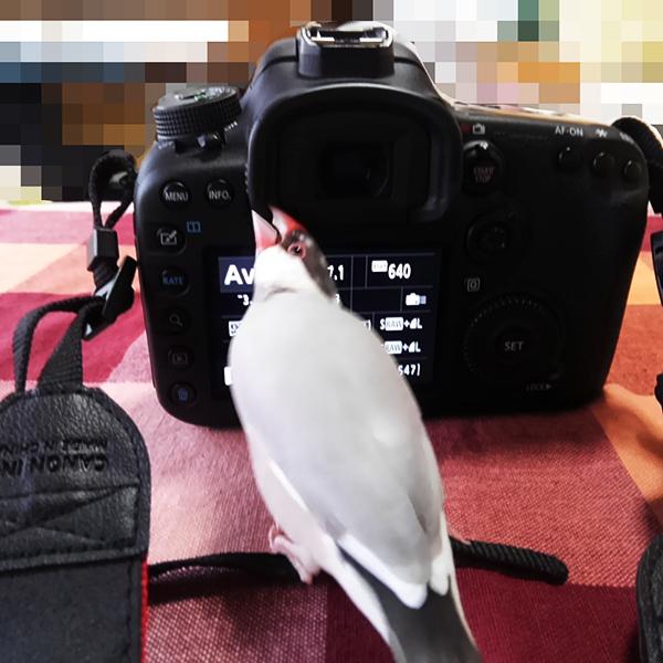 きなこカメラKIMG0812