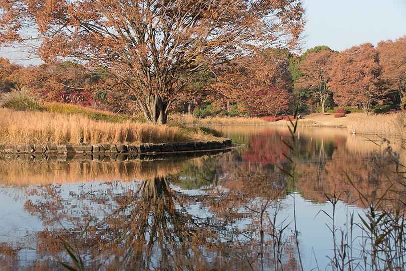 池と紅葉s0H7A9978