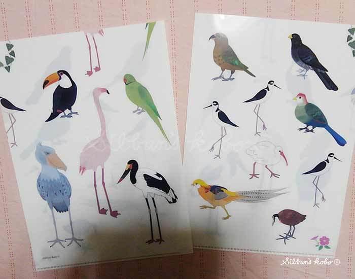 鳥の会2019クリアファイルKIMG1939