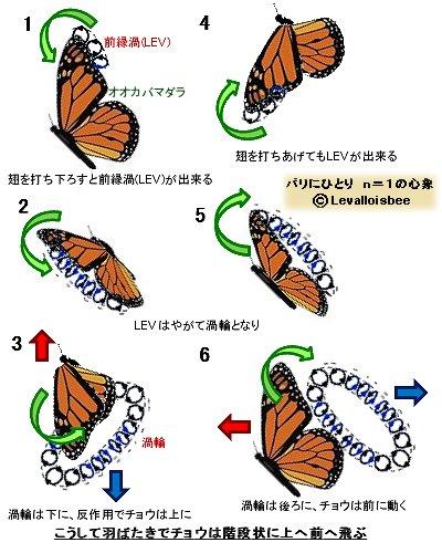 渦輪でチョウは上へ前へ飛ぶ