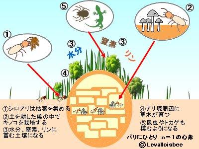 乾燥地帯の生態系を支えるシロアリ塚