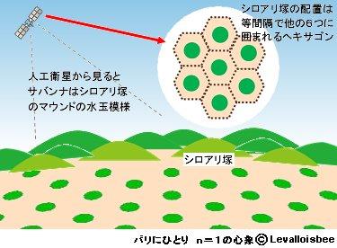シロアリ塚は互いに等距離のヘキサゴン水玉模様