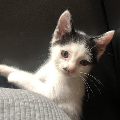 カツラ子猫2