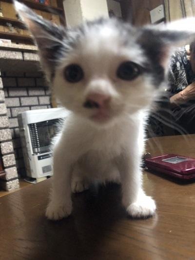 カツラ子猫3