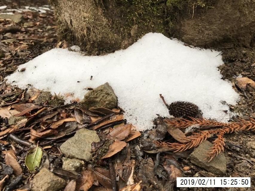 2019年2月11日、雪が降ったようだ