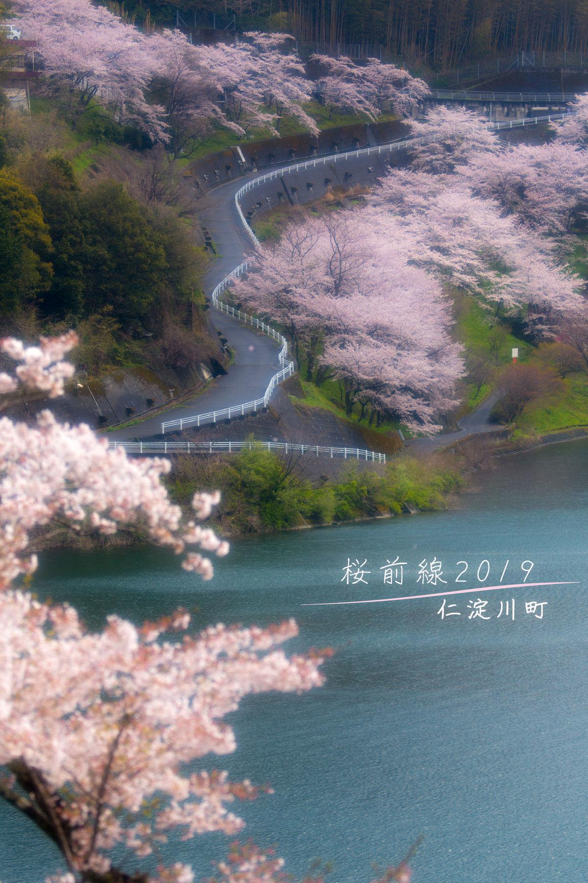【桜遠征】桜前線2019 &うさぎ島(広島~高知)
