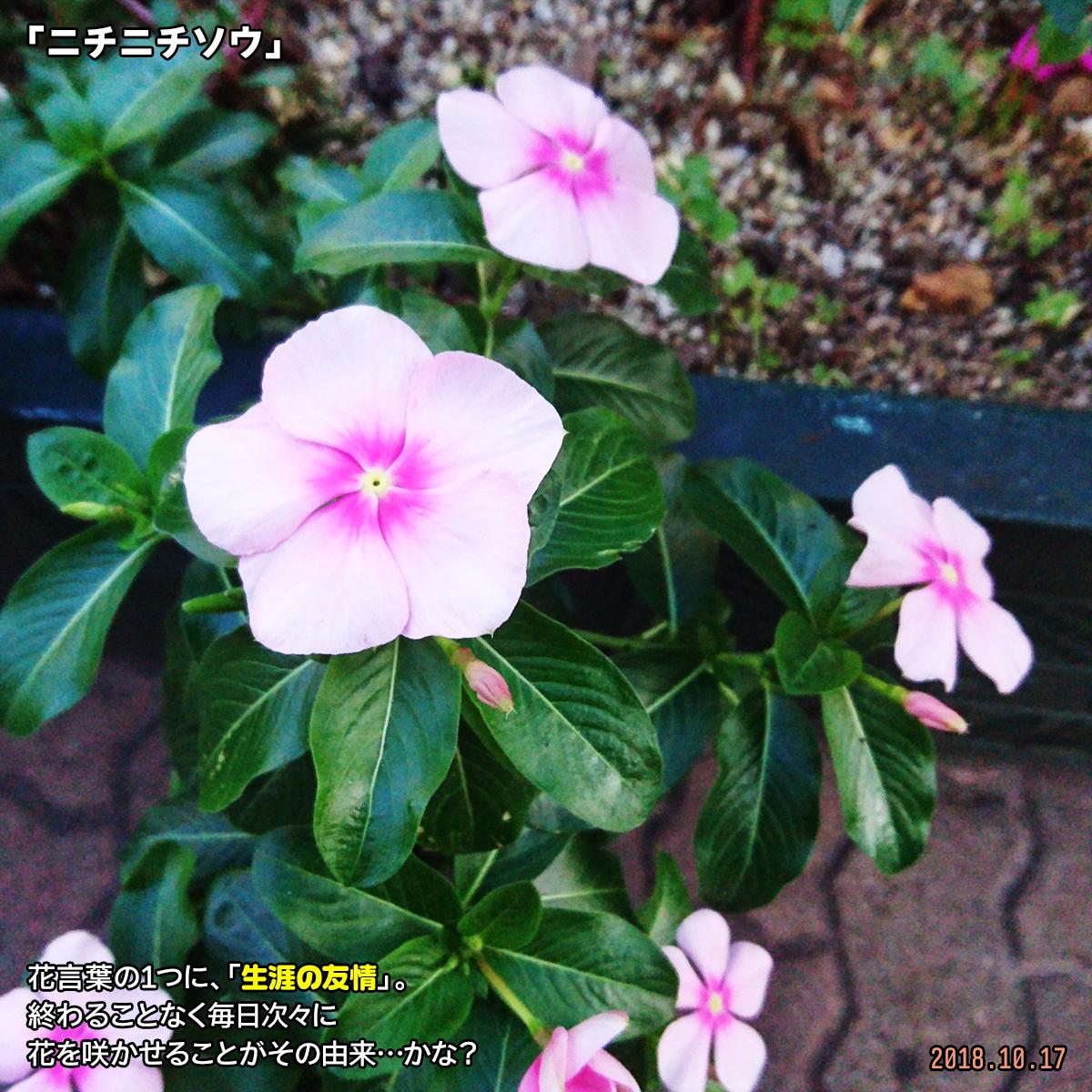 DSC_8445_20190207163903fac.jpg